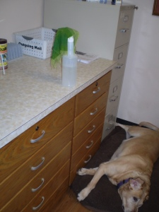 I guess Gracie isn't always much help as a guard-dog!